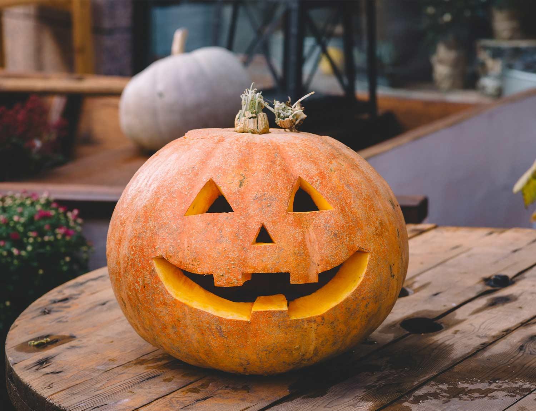 Pumpkin-Picking-at-Winston-Farm-Ellesmere-Oswestry