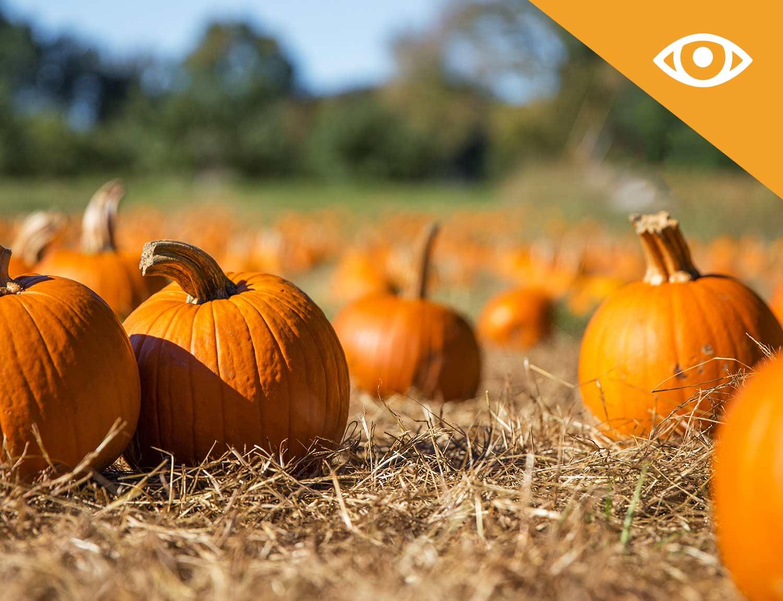 Winston-Farm-Pumpkin-Patch---Pick-your-own-Pumpkins