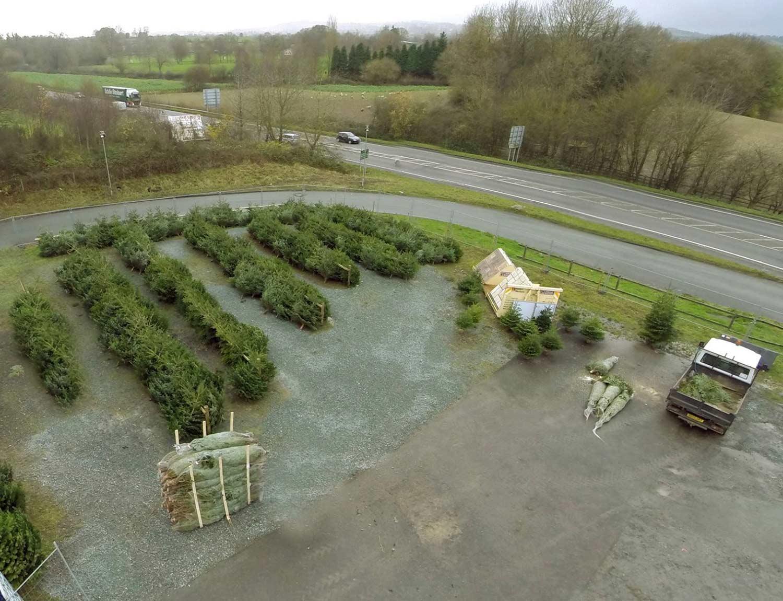 Gledrid-Services-Christmas-Trees-by-Winston-Farm