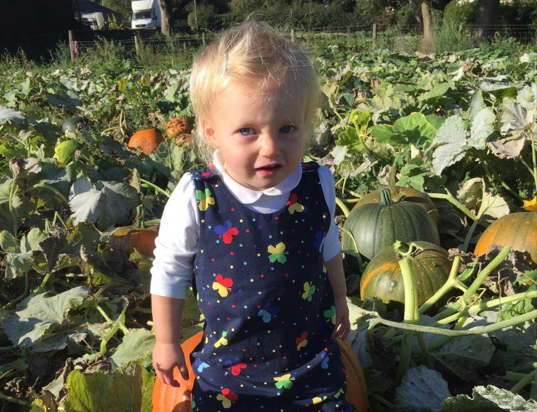 Pumpkin-Picking-Winston-Farm---Home-grown-pumpkins
