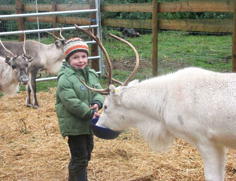 Winston-Farm-Reindeer